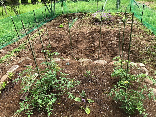 6月の菜園