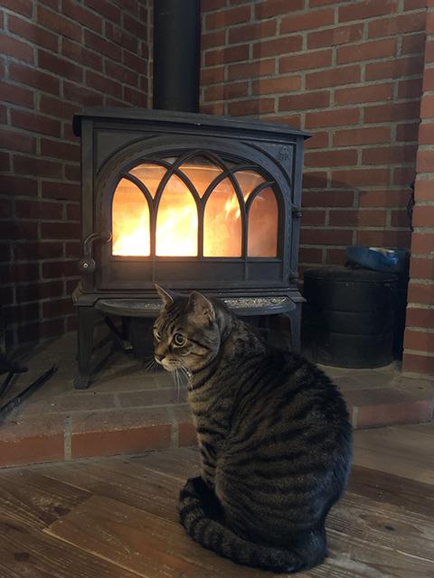 (写真:薪ストーブとうちの猫)
