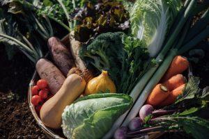畑山農場の野菜