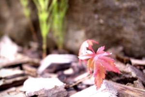 「生長の家自然の恵みネットフォーラム」特設サイト